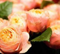 HochzeitsstraussinDaenemark5-6cc243a2